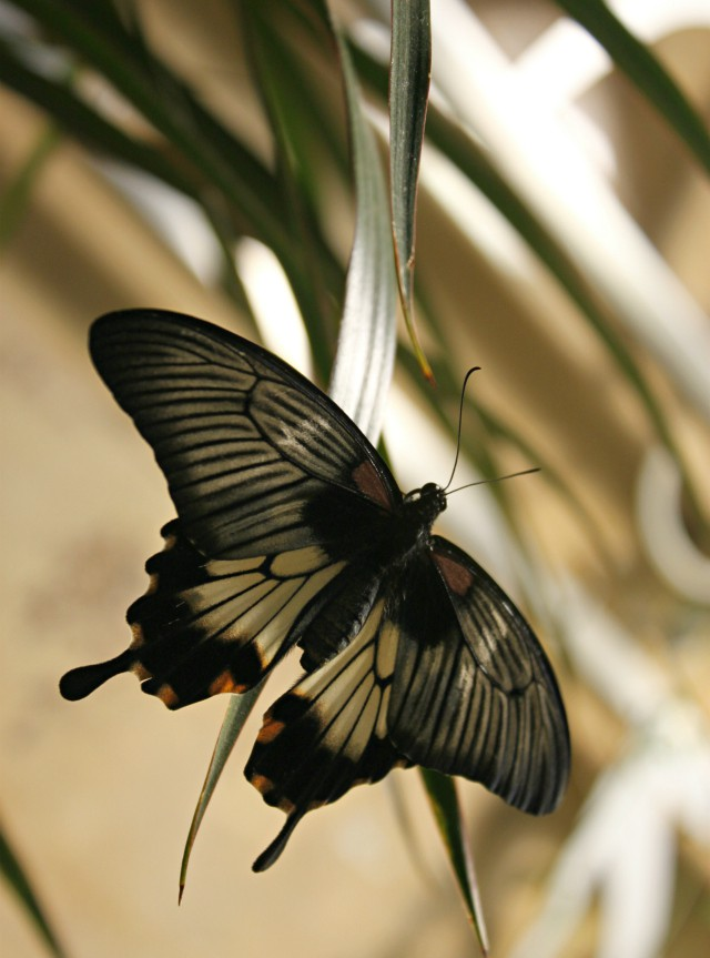 butterfly-exhibition-01