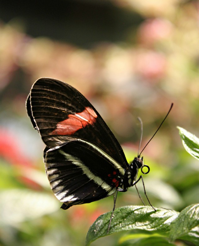 butterfly-exhibition-02
