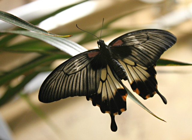 butterfly-exhibition-06
