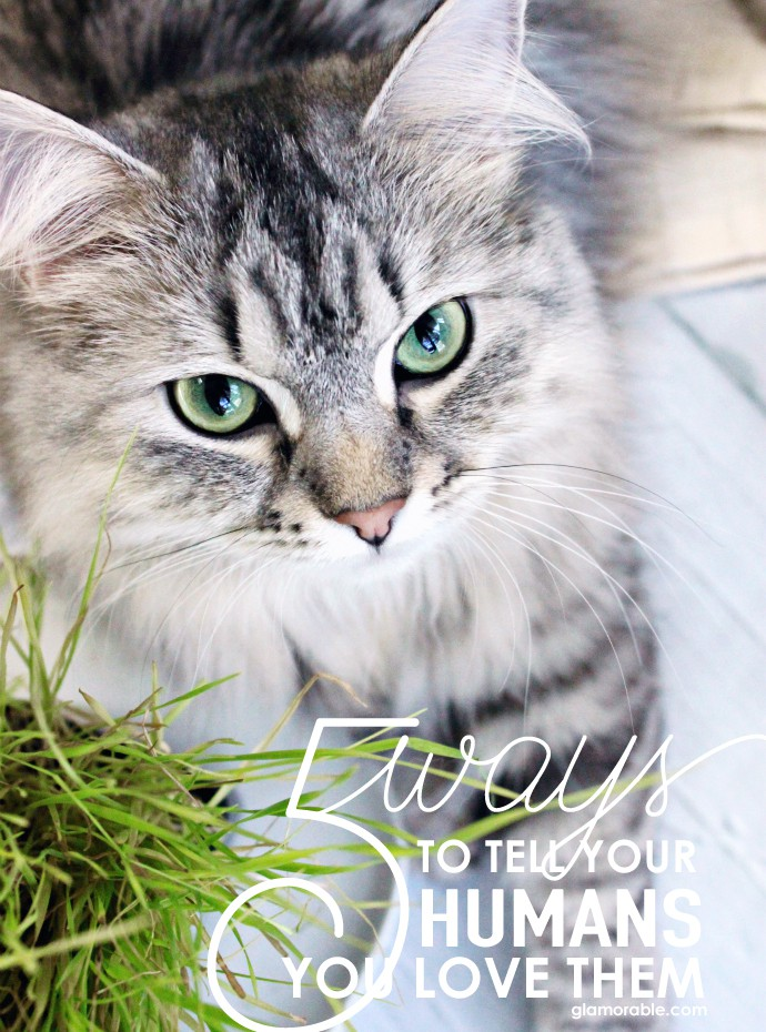 Luna's Corner #4 - How to Tell Your Cat Loves You