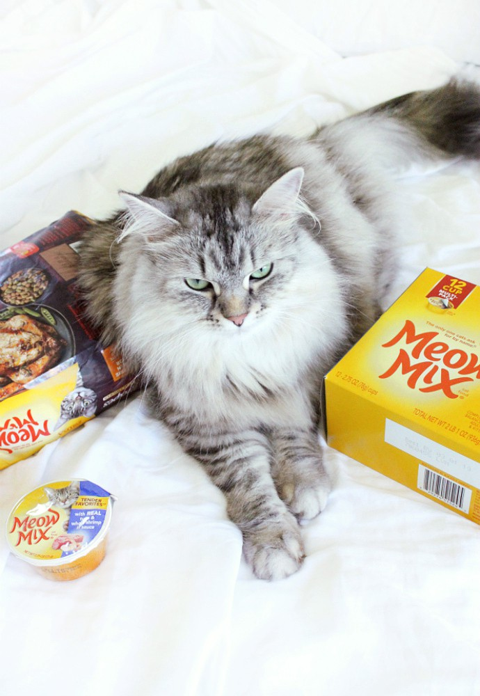 How to bond with your cat ft. Meow Mix cat food and treats